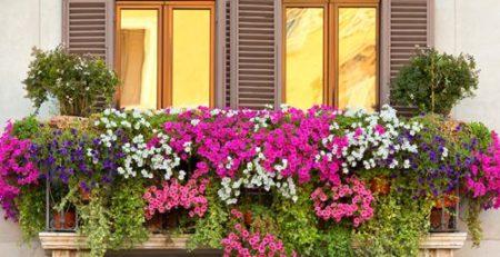 Plantas para terraza